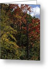 Tall Fall Trees Greeting Card