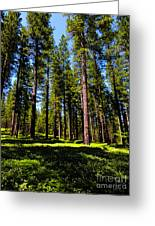 Tall Forest Greeting Card