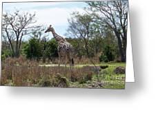 Tall Giraffe Greeting Card