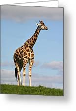 Tall Giraffe In A Field Fota Ireland Greeting Card