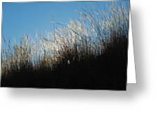 Tall Grass And Sunlight Greeting Card