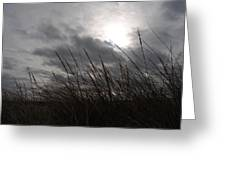 Tall Grass And The Blues Greeting Card