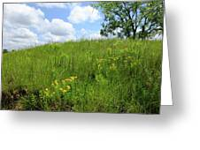 Tall Grass Hillside Greeting Card by Scott Kingery