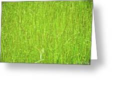 Tall Grassy Meadow Greeting Card