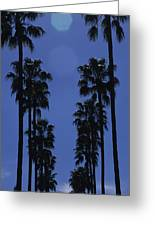 Tall Palm Trees In A Row Greeting Card