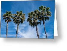Tall Palms Couples Greeting Card
