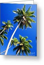 Tall Palms Greeting Card