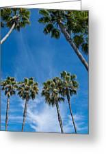 Tall Palms Meet The Sky Greeting Card