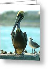 Tall Pelican Greeting Card