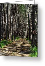 Tall Pine Lined Path Greeting Card