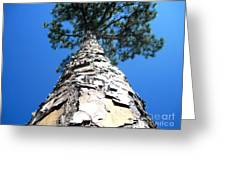 Tall Pine Tree In Summer Greeting Card