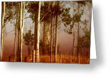 Tall Timbers Greeting Card