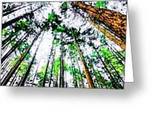 Tall Trees To The Sky Greeting Card