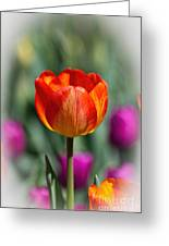 Tall Tulip Vertical Greeting Card