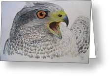 Talon Greeting Card