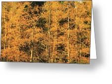 Tamarack Foliage Greeting Card