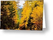 Tamarack Trail Greeting Card
