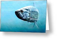 Tampa Bay Tarpon Greeting Card