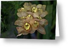 Tan And Yellow Orchid Greeting Card