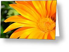 Tangerine Side Bloom Greeting Card