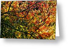 Tangled Branches Greeting Card