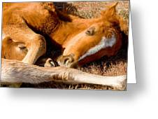 Tangled Foals Greeting Card