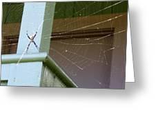 Tangled Web Greeting Card