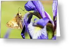 Tan_moth Greeting Card