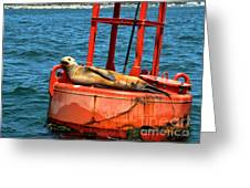Tanning Sea Lion On Buoy Greeting Card