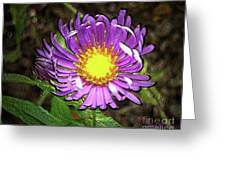 Tansyleaf Aster Greeting Card