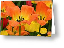 Tantalizing Tulips Greeting Card