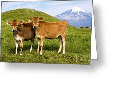 Taranaki, Dairy Cows Greeting Card