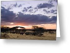 Tarangire Sunset Greeting Card