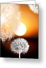 Taraxacum Sunset Greeting Card