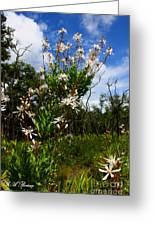 Tarflower Blooming Greeting Card