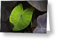 Taro Hoomaluhia 2 Greeting Card