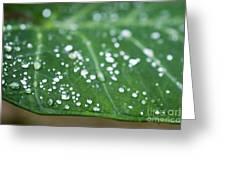 Taro Leaf Greeting Card