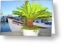 Tarpon                 Tarpon Palm                                     Greeting Card