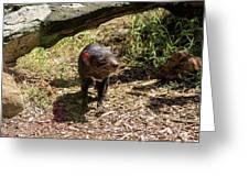 Tasmanian Devil 2 Greeting Card