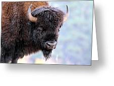 Tatanka Portrait Greeting Card