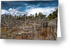 Tate's Hell State Forest Greeting Card