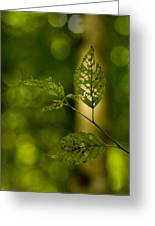 Tattered Leaves Greeting Card