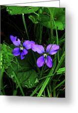 Tattered Wild Violets Greeting Card