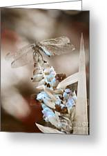 Tattered Wings B1 Greeting Card