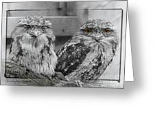 Tawney Frogmouths Greeting Card