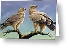 Tawny Eagles Greeting Card