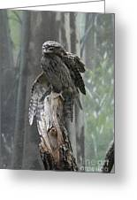 Tawny Frogmouth With It's Eyes Closed And Wing Extended Greeting Card
