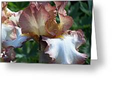 Tawny Iris Photograph Greeting Card