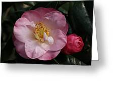 Taylor's Perfection Camellia Greeting Card
