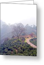 Tea Field Greeting Card